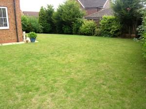 Sunny South Facing Rear Garden